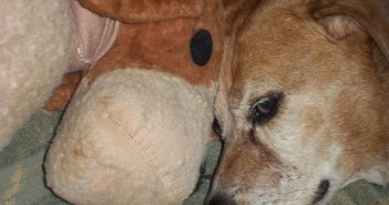beckles-doggy-heaven-001