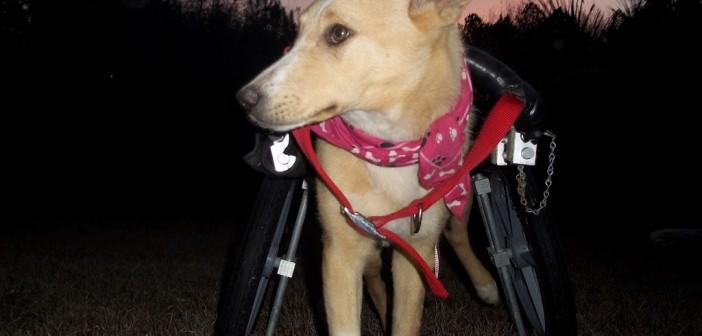 mercy-wheelchair1