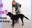 Need Peace- lesson from 3-legged Lucy