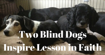 two blind dogs inspire lesson in faith www.walkbyfaithministry.com