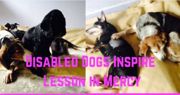 disabled dogs inspire lesson in mercy
