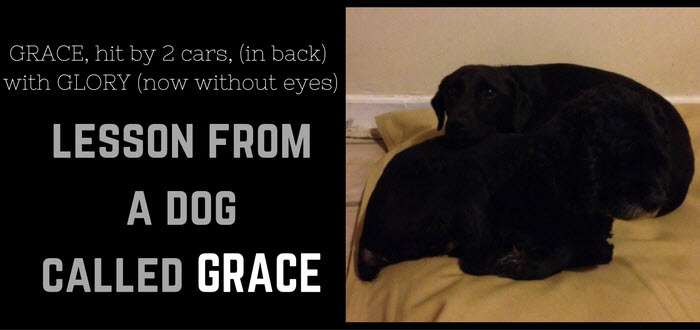 grace lesson from a dog called grace with glory