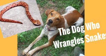 dog who wrangles snakes