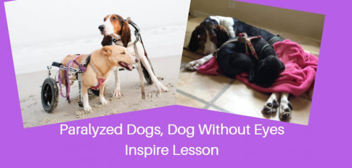 paralyzed dogs dog without eyes inspire lesson