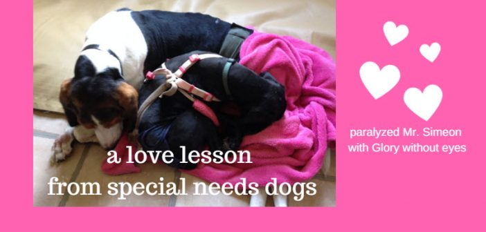 love lesson from special needs dogs