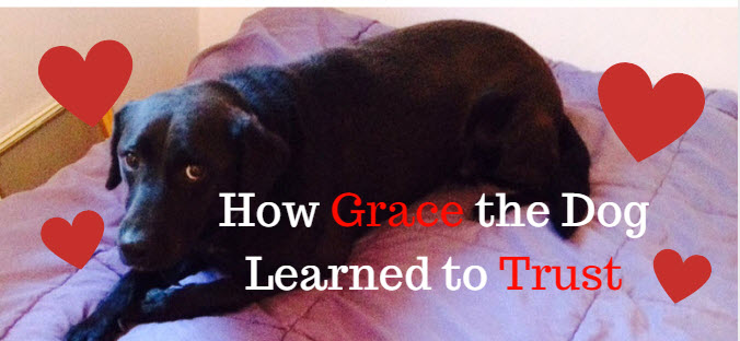 How Grace the Dog Learned to Trust