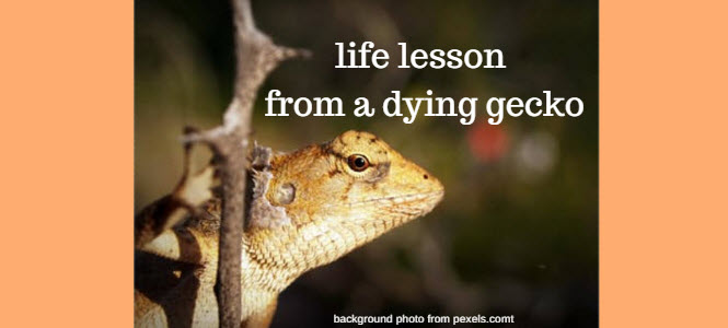 life lesson from a dying gecko