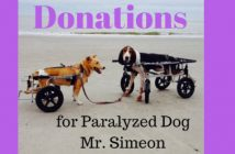 donations for paralyzed dog mr. simeon