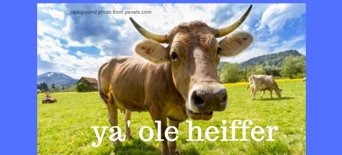 ya ole heiffer