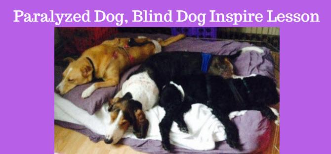 paralyzed dog blind dog inspire lesson