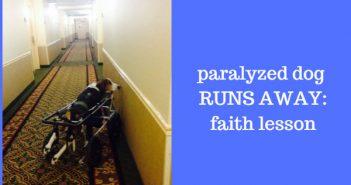 paralyzed dog runs away - faith lesson