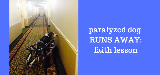 paralyzed dog runs away - faith lesson