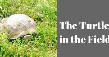 turtle in the field