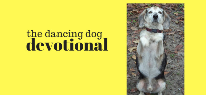 dancing dog devotional