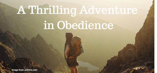 thrilling adventure in obedience