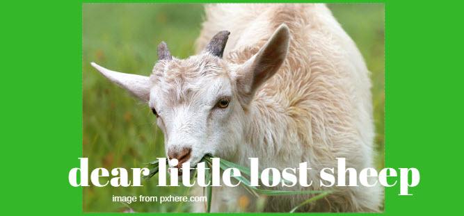 dear little lost sheep