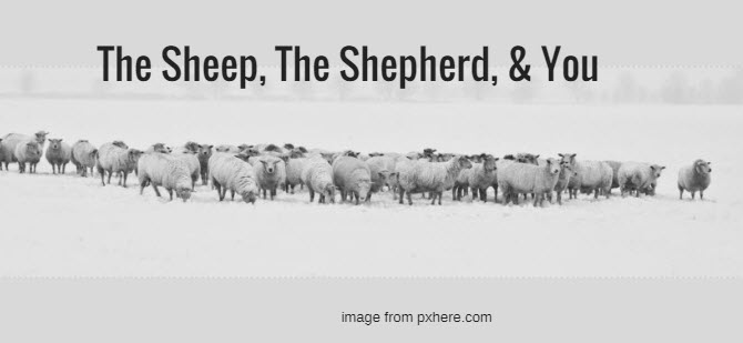 sheep, the shepherd, and you