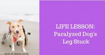 life lesson paralyzed dog's leg stuck