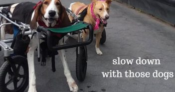 slow down with those dogs