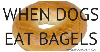 WHEN DOGS EAT BAGELS