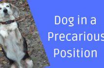dog in a precarious position
