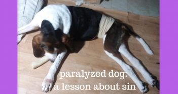 paralyzed dog a lesson about sin