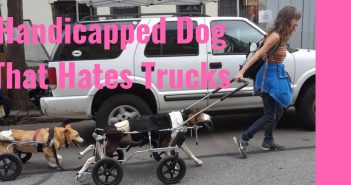 handicapped dog that hates trucks