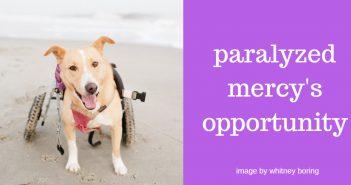 paralyzed mercys opportunity
