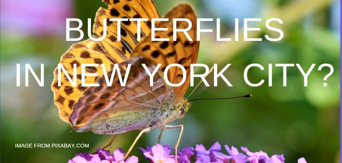 butterflies in new york city