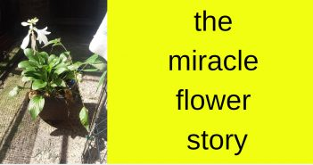 miracle flower story