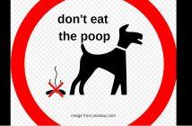 don't eat hte poop