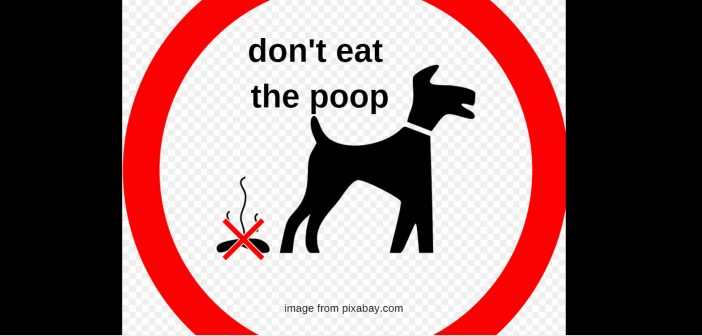 Don't Eat the Poop