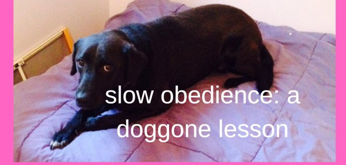 Slow Obedience: A Doggone Lesson