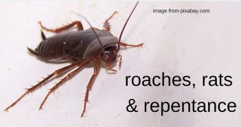 roaches rats and repentance